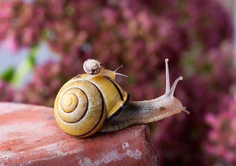 蜗牛原液是什么?蜗牛原液有哪些作用和副作用?蜗牛原液要怎么使用?